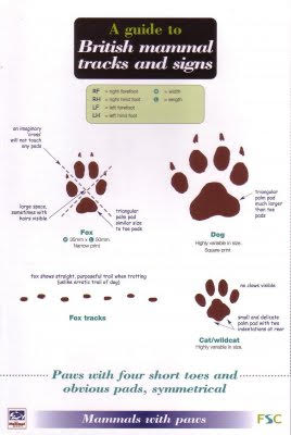 British Mammal Tracks and Signs, a guide