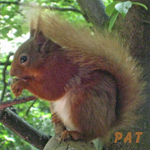 Squirrel-with-nutkins150x150