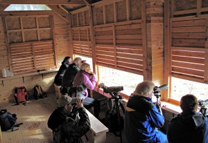 Inside the new hide at Loch Fleet