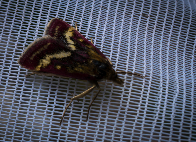 Moth near the Bone Caves.