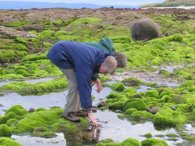 Examining the Green Beach.